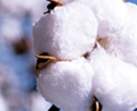 Lower Impact Cotton